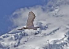 Mountain-Bird