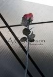 Rose Sculpture Las Vegas
