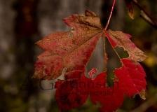 Leaf-Hole