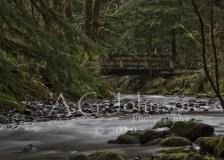 Necarney Creek OR