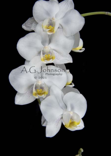 Orchid photos, painting with light,